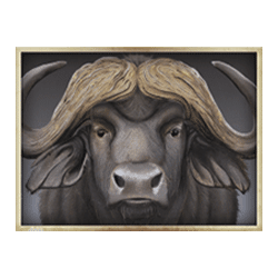 Icon 4 Safari