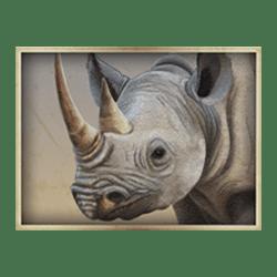 Icon 5 Safari