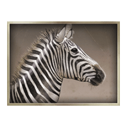 Icon 6 Safari