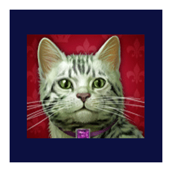 Icon 6 Diamond Cats