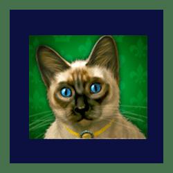 Icon 7 Diamond Cats