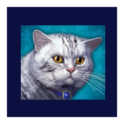 Icon 8 Diamond Cats