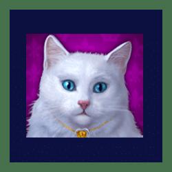 Icon 3 Diamond Cats