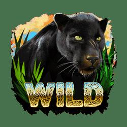 Wild Symbol of Wildcano with Orbital Reels Slot