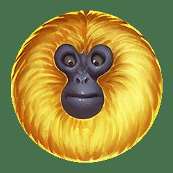 Icon 2 7 Monkeys