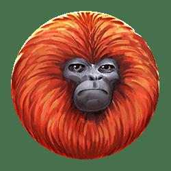 Icon 5 7 Monkeys