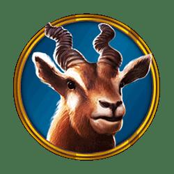 Icon 5 Hot Safari
