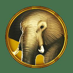 Icon 2 Hot Safari