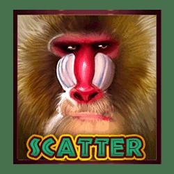 Scatter of Hot Safari Slot