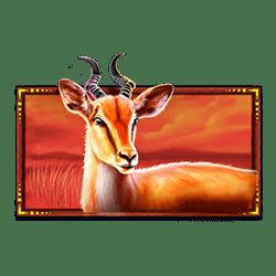Icon 5 Safari King