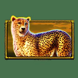 Icon 3 Safari King