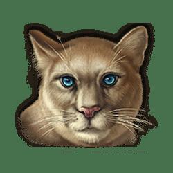 Icon 6 Super Cats