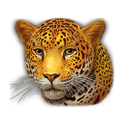 Icon 5 Super Cats