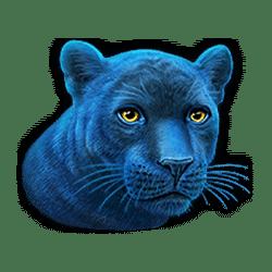 Icon 4 Super Cats