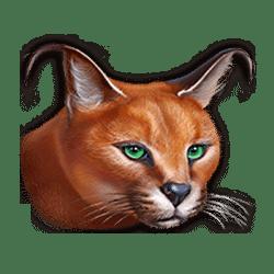 Icon 7 Super Cats