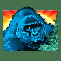 Icon 1 Congo Cash