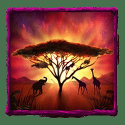 Scatter of Safari Sam 2 Slot