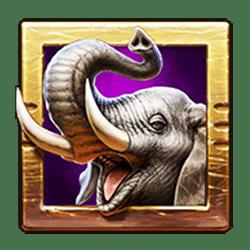 Icon 2 Zulu Gold