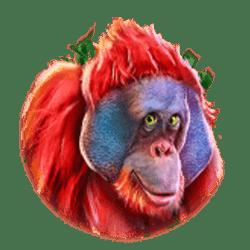 Icon 4 King Koko's Quest